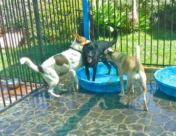 These pups LOVE cooling down by splashing each other!