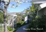 happy-dog-ranch