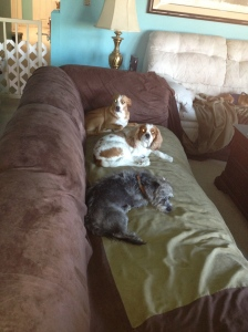 Most of our visiting doggies just LOVE relaxing on the sofa!